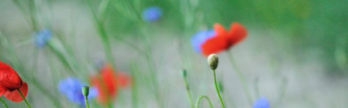 cropped-blurry-flowers.jpg