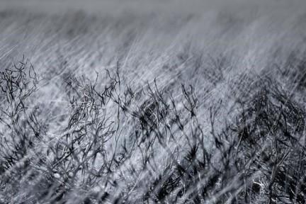 grass black and white (2)